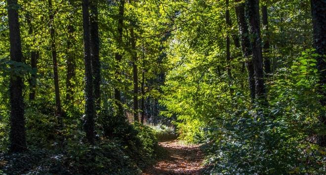 Poučna šumska staza na Kamenitovcu